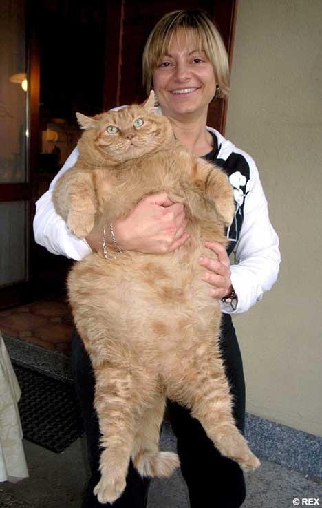 Orazio - Real Life Version of Garfield