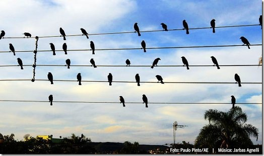 Song-Composed-By-Birds