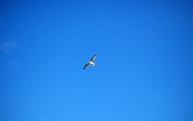 Blue_sky_bird