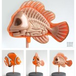 Finding Nemo Anatomy Sculpture