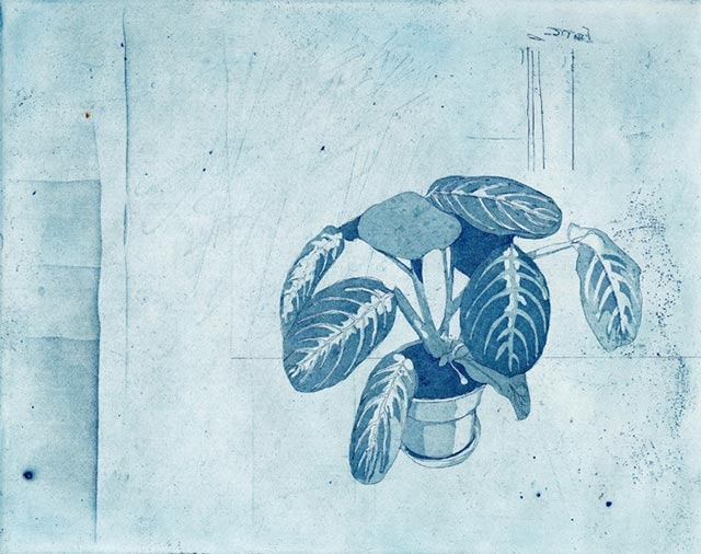 Marcel-Cowling-plant