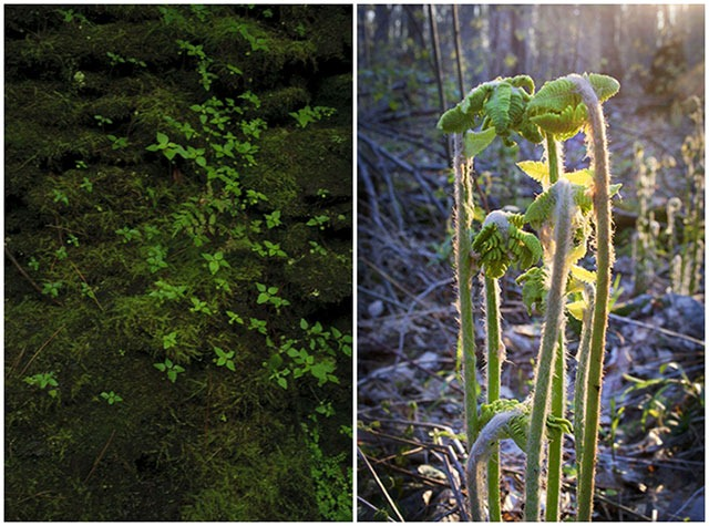 Mina-Georgescu-Forest-Magic-in-the-spring