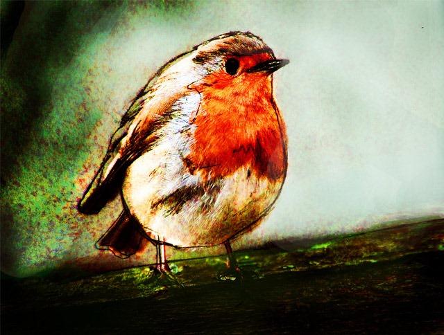 Peatree-Bojangles-robin