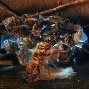 """Xavier Nuez's """"Glam Bugs"""" - A Series of Photographs"""