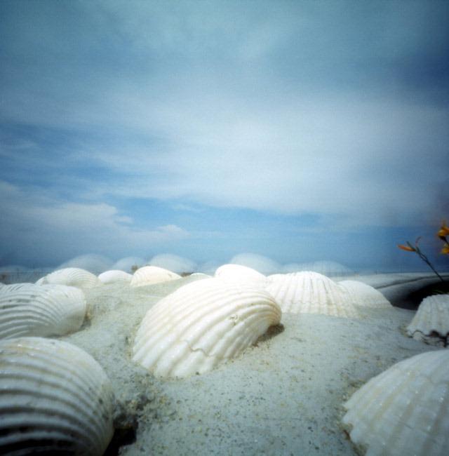 Sea-shells,-San-Diego