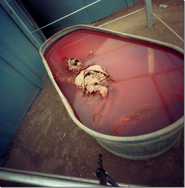 Skeleton-in-blood-bath,-Fear-Farm-Haunted-House