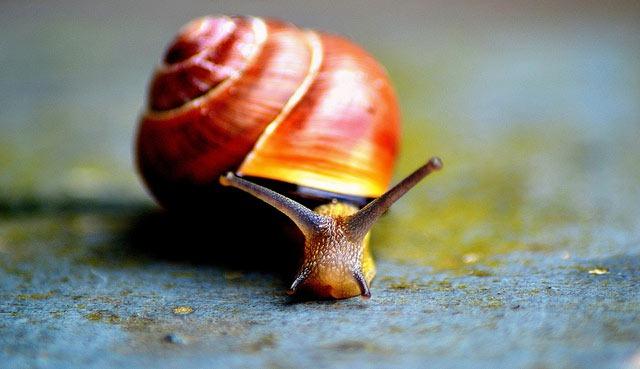 snail-face
