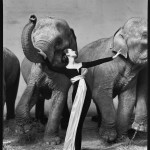 Dovima with Elephants – A Beautiful Vintage Photograph