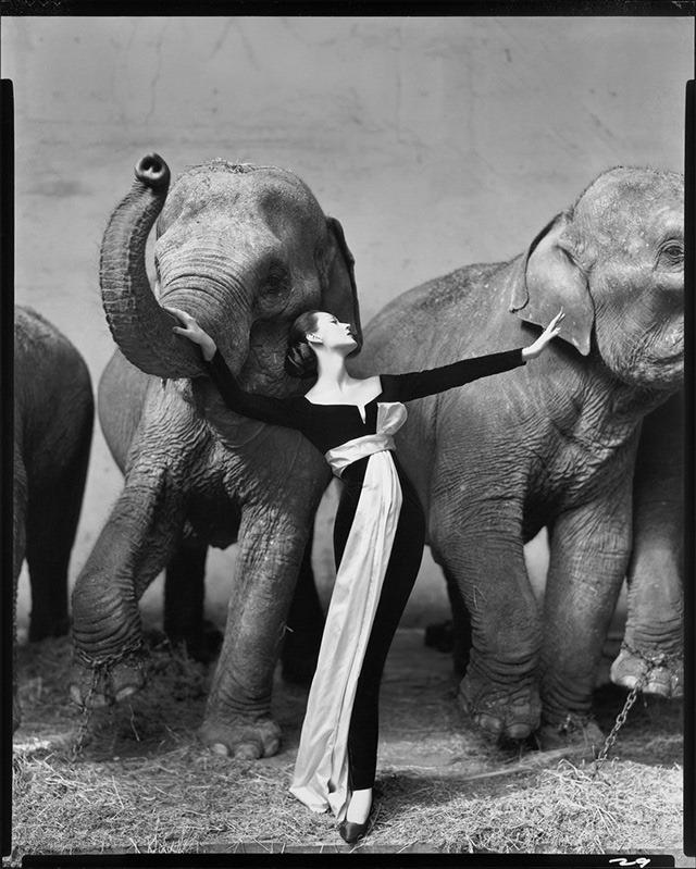 Dovima-with-elephants-by-Richard-Avedon_thumb