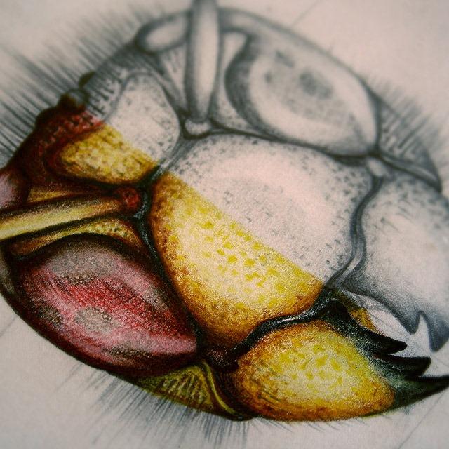 Insect-Entomology-Beautiful-small-things---Illustrations-by-Paula-Duta-01-2
