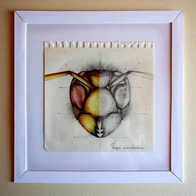 Insect-Entomology-Beautiful-small-things---Illustrations-by-Paula-Duta-01