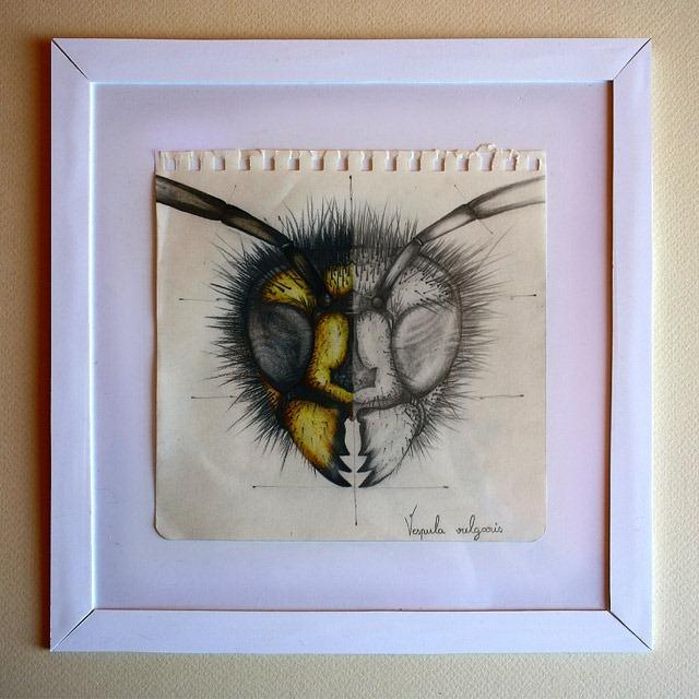 Insect-Entomology-Beautiful-small-things---Illustrations-by-Paula-Duta-02