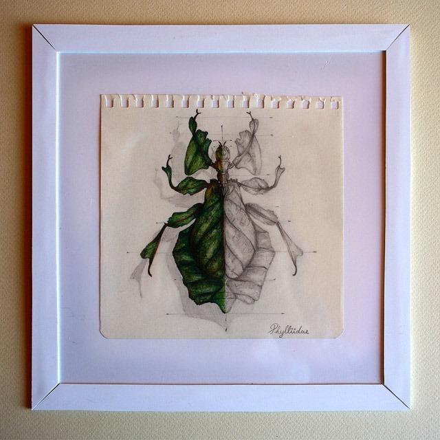 Insect-Entomology-Beautiful-small-things---Illustrations-by-Paula-Duta-04