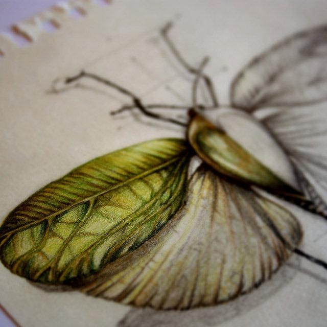 Insect-Entomology-Beautiful-small-things---Illustrations-by-Paula-Duta-05-2