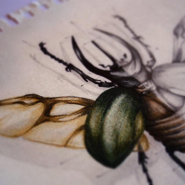 Insect-Entomology-Beautiful-small-things---Illustrations-by-Paula-Duta-06-2