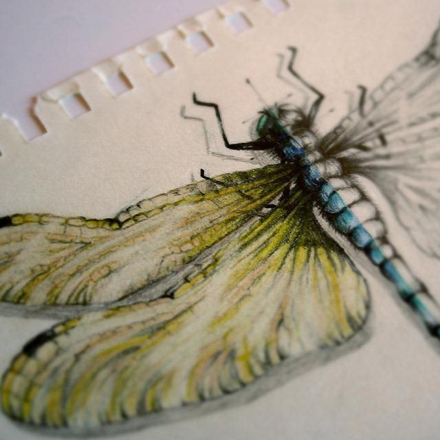 Insect-Entomology-Beautiful-small-things---Illustrations-by-Paula-Duta-07-2