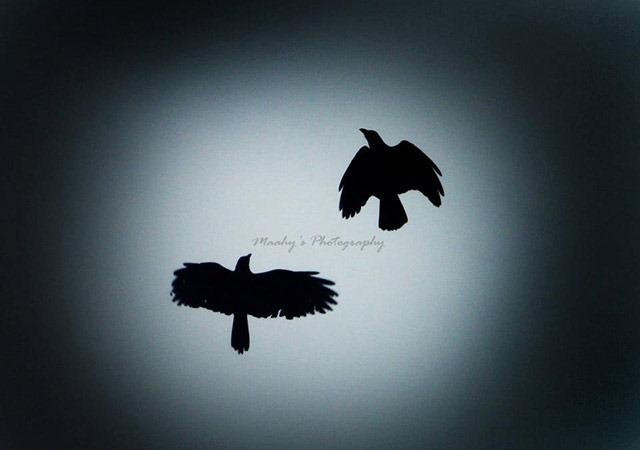 Maahy-photography-birds