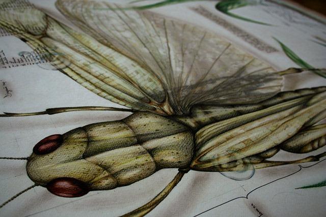 Paula-Duta-Entomology-of-Locusta-Migratoria-02