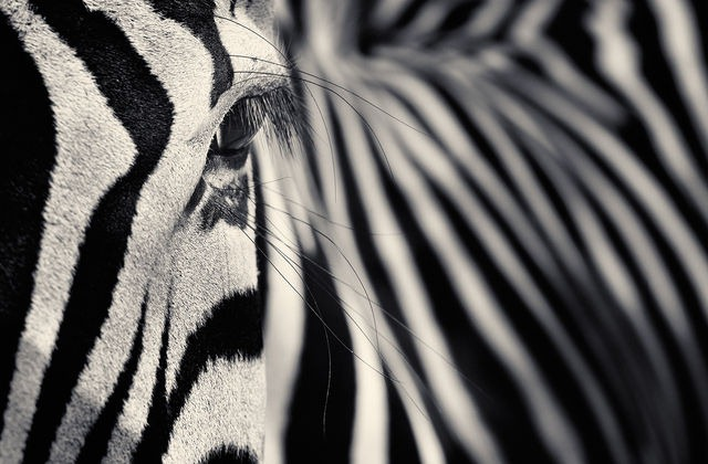 Creatures I A Series of Photographs by Antti Viitala 07