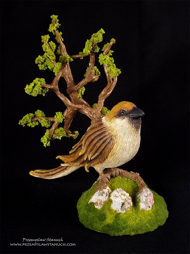 Arborescent sparrow - Przemyslaw Stanuch 2016