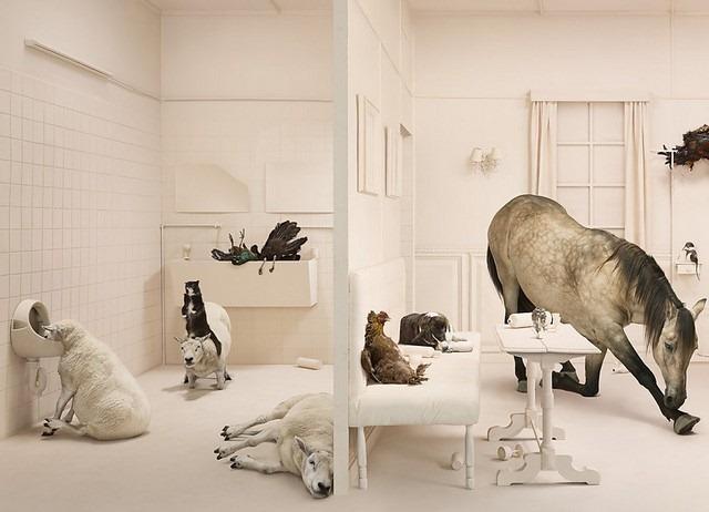 Frieke Janssens ANIMALCOHOLICS Surreal Photo Series 10