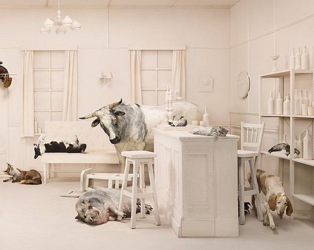 Frieke Janssens ANIMALCOHOLICS Surreal Photo Series 11