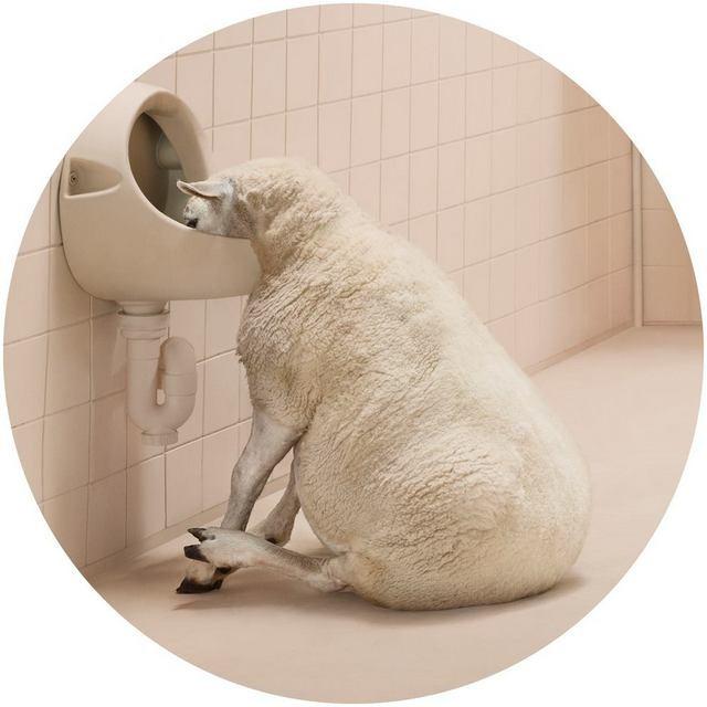 Frieke Janssens ANIMALCOHOLICS Surreal Photo Series 1