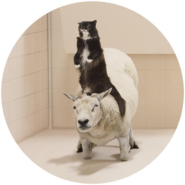 Frieke Janssens ANIMALCOHOLICS Surreal Photo Series 7