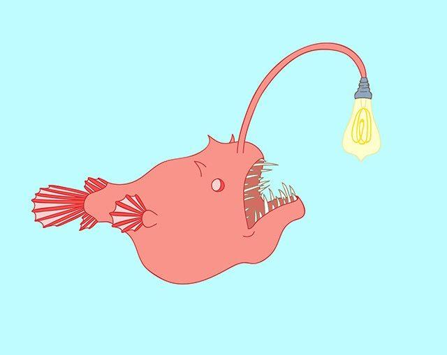 Jasmine-Echols-Graphic-Design-Illustrations-Angler-Fish
