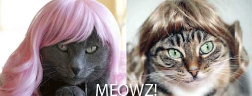 Kitty Wigs – For Cats Living With Lonely Men