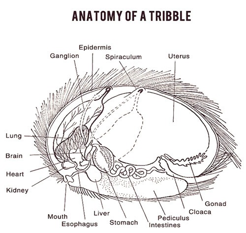 Anatomy Of A Tribble