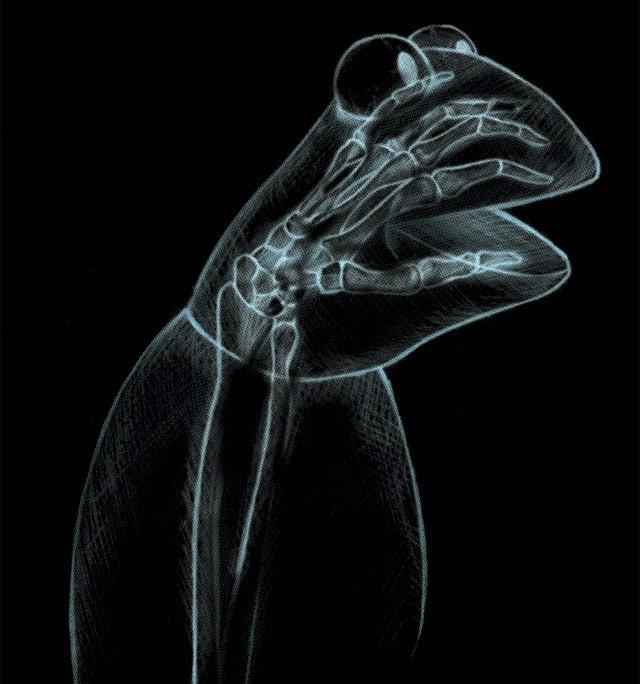 Kermit's X-ray T-Shirt