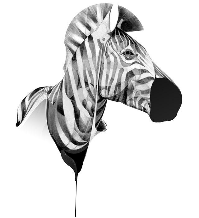 hellovon_zebra