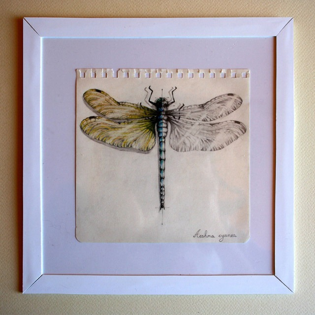 Insect-Entomology-Beautiful-small-things---Illustrations-by-Paula-Duta-07