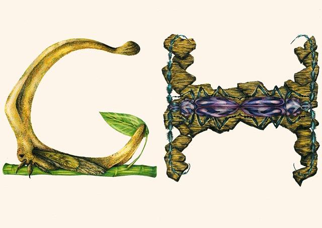 G-H-Insect-Alphabet-Illustration-by-Paula-Duta