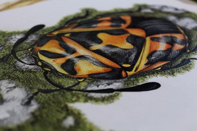 Insect-Alphabet-Illustration-by-Paula-Duta-02