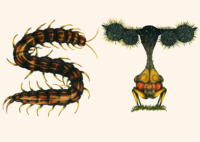 S-T-Insect-Alphabet-Illustration-by-Paula-Duta
