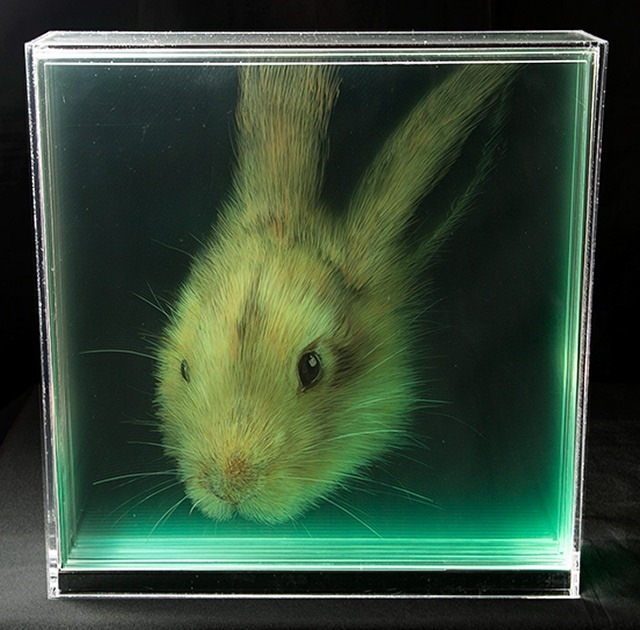 Hare-Holographic-Paintings-of-Animal-Heads-by-Yosman-Botero