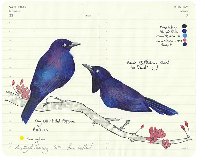 All-My-Beautiful-Boys-Ornithological-Drawings-by-Fran-Giffard-Amethyst-Starling.jpg
