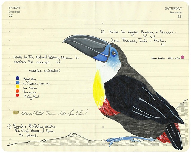 All-My-Beautiful-Boys-Ornithological-Drawings-by-Fran-Giffard-Channel-Billed-Toucan.jpg