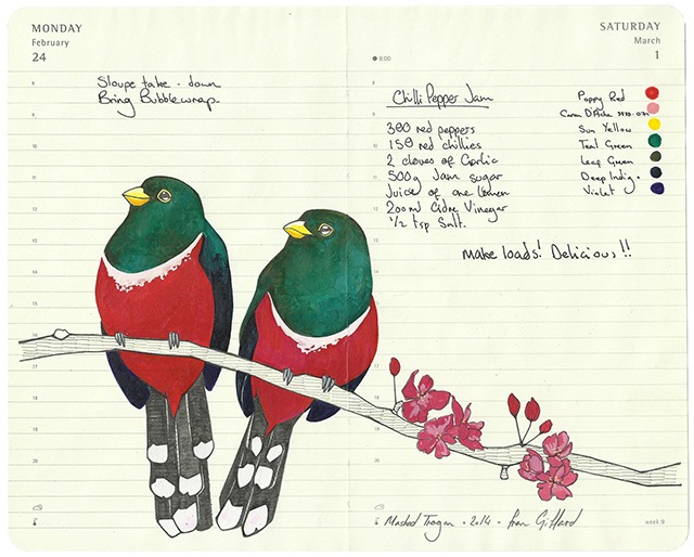 All-My-Beautiful-Boys-Ornithological-Drawings-by-Fran-Giffard-Masked-Trogon