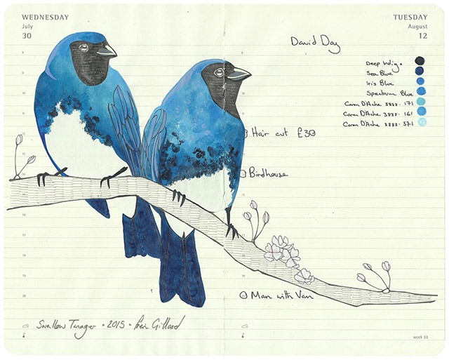 All-My-Beautiful-Boys-Ornithological-Drawings-by-Fran-Giffard-Swallow-Tanager