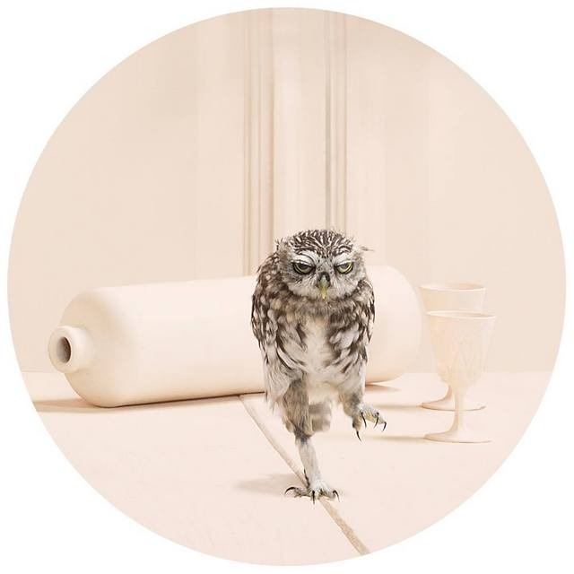 Frieke Janssens ANIMALCOHOLICS Surreal Photo Series 3
