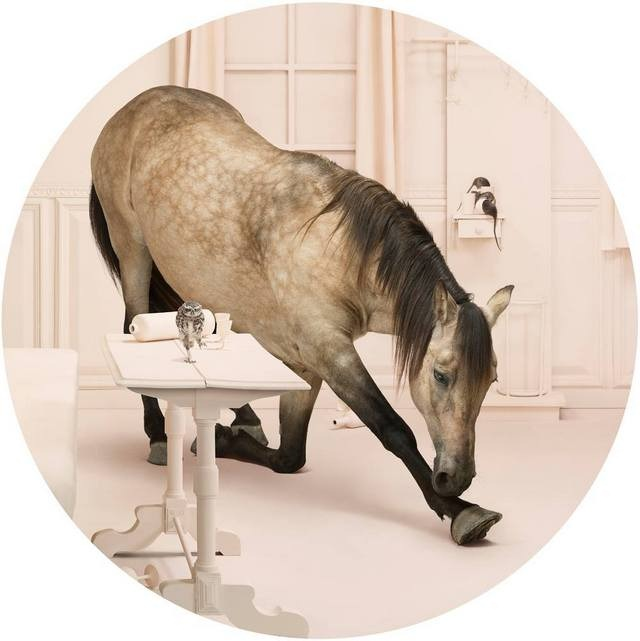 Frieke Janssens ANIMALCOHOLICS Surreal Photo Series 5