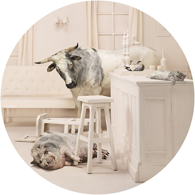Frieke Janssens ANIMALCOHOLICS Surreal Photo Series 8