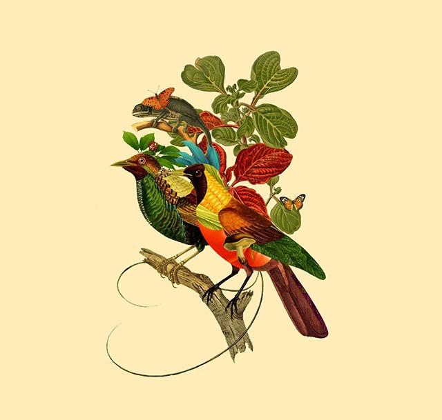 Birds-Patterns-Digital-Art-Collages-by-Orbeh-Studio